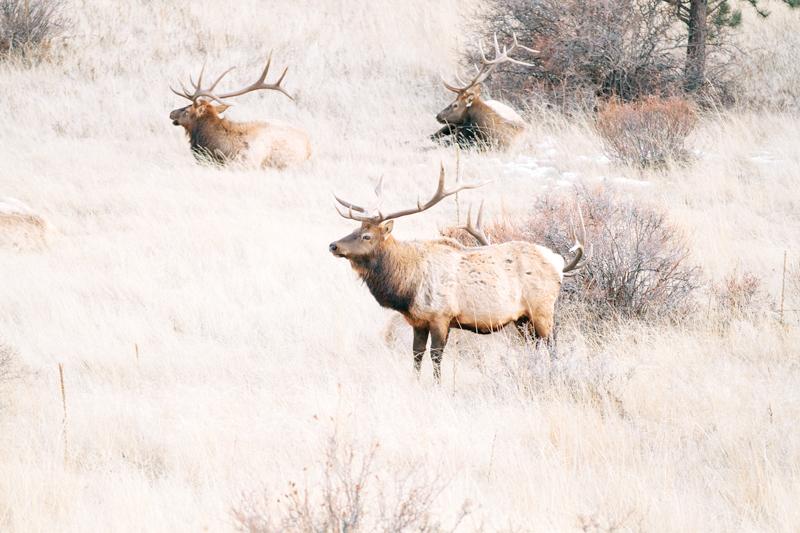 elk-close