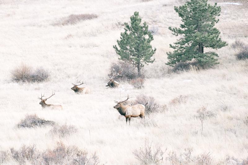 elk-four