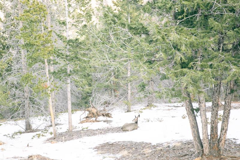 forest-deer-back