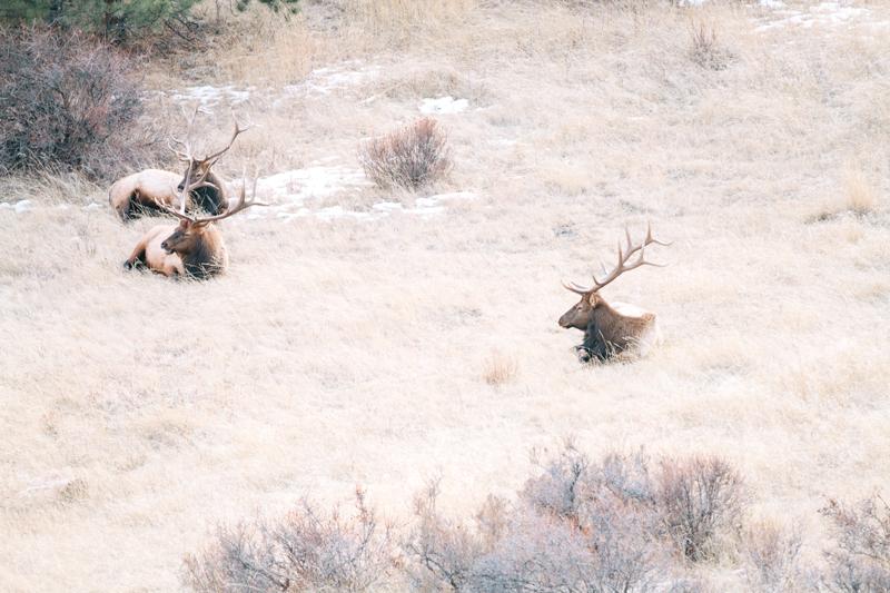 three-elk