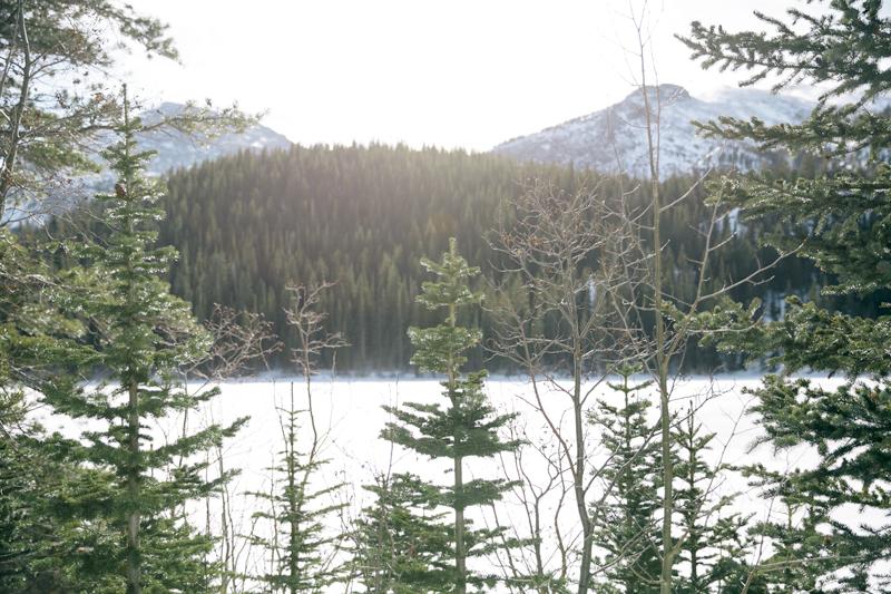 trees-mountain