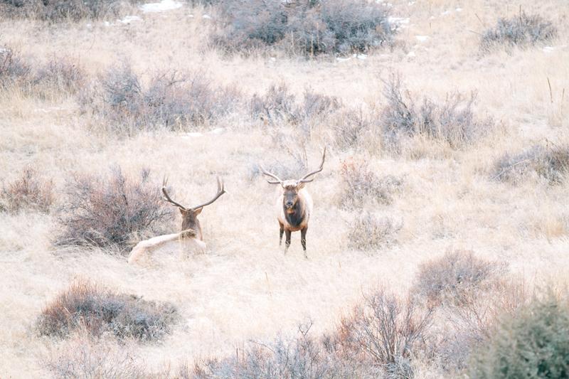two-elk