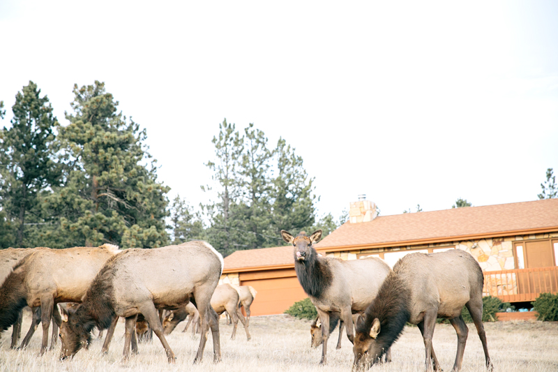 young-elk-house