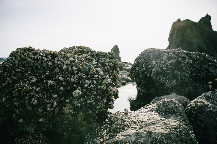 mussel-rocks